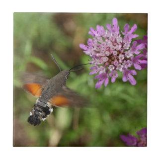 ハチドリのタカガ(Macroglossumのstellatarum) タイル