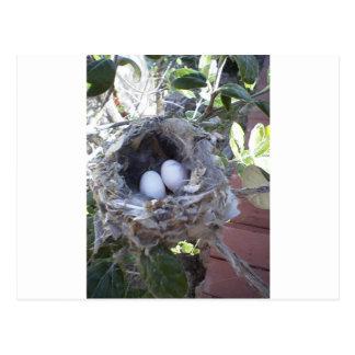 ハチドリの卵 ポストカード