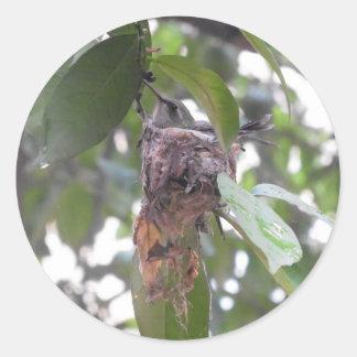 ハチドリの巣メキシコ ラウンドシール
