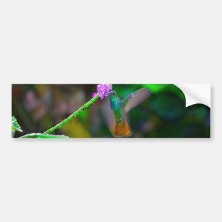 ハチドリの庭 バンパーステッカー