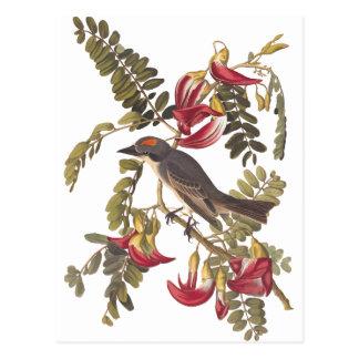 ハチドリの木のAudubonの灰色Kingbird ポストカード
