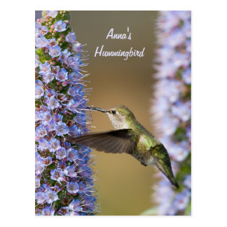 ハチドリの花のカスタムの郵便はがき ポストカード