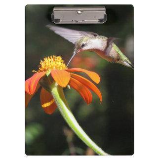 ハチドリの鳥のヒマワリの花の花柄の庭 クリップボード