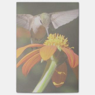 ハチドリの鳥のヒマワリの花の花柄の庭 ポストイット