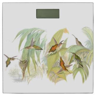 ハチドリの鳥の巣の野性生物動物の葉 体重計