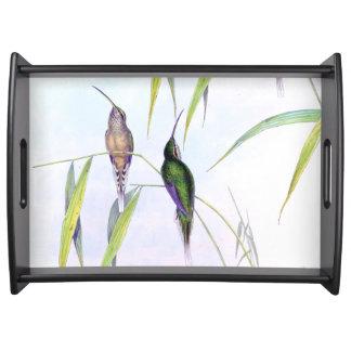 ハチドリの鳥の野性生物動物Gould トレー
