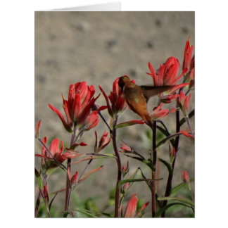 ハチドリの(鳥)ショウジョウコウカンチョウflw. カード
