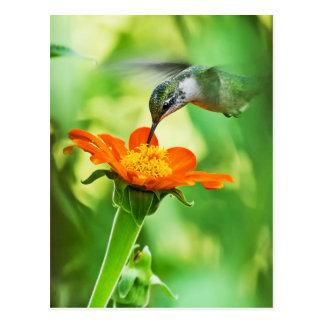 ハチドリは一口を取ります ポストカード