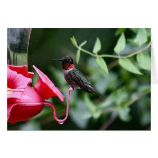 ハチドリ-挨拶状-メッセージカード-写真 グリーティングカード