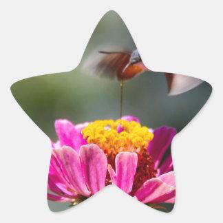 ハチドリ 星シール