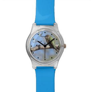 ハチドリ 腕時計