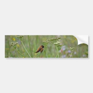 ハチドリ: 花の鳥 バンパーステッカー
