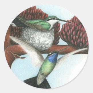 ハチドリ:  Blue_throated ラウンドシール