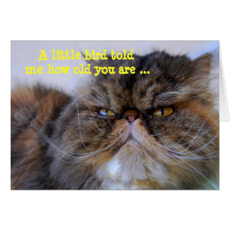 ハッピーバースデーのユーモアのさらさのペルシャの子猫カード カード