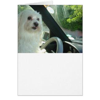 ハッピーバースデーの古い犬 カード