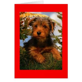 ハッピーバースデーのAiredaleテリアの小犬カード カード