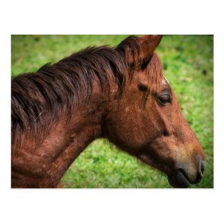 ハナの馬小屋のベリセの馬の郵便はがき ポストカード