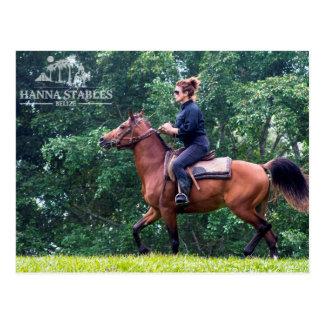 ハナの馬小屋ベリセのテリーの乗馬 ポストカード