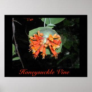 ハニーサックルのつる植物のプリント ポスター