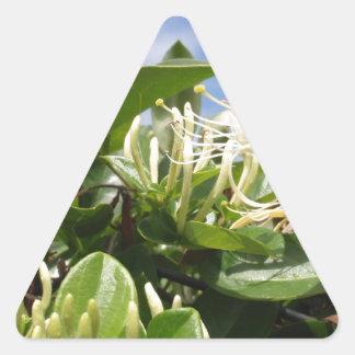 ハニーサックル 三角形シール
