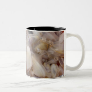 ハマグリのマグ ツートーンマグカップ