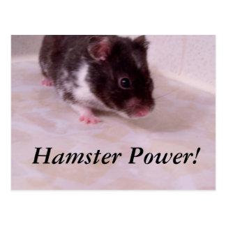 ハムスター力ノアのハムスター力! ポストカード