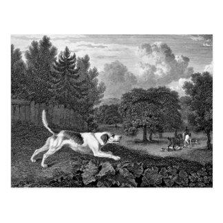 ハリアー犬の古い芸術 ポストカード