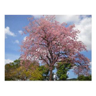 ハリスの遊歩道サンフェルナンドのPouiのピンクの木 ポストカード