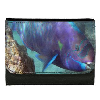 ハワイのオウムの魚