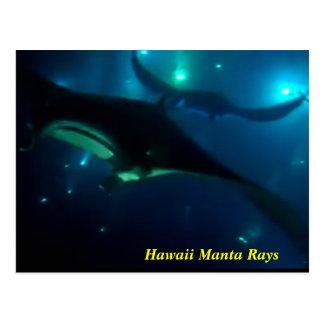 ハワイのオニイトマキエイ ポストカード
