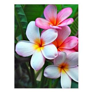 ハワイのハイビスカスの花の郵便はがき 葉書き