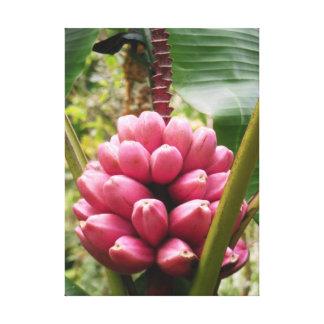 ハワイのピンクのバナナ キャンバスプリント