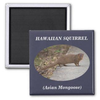 ハワイのリス(アジアマングース)の正方形の磁石 マグネット