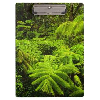 ハワイの大きい島、緑豊かな熱帯緑の草木 クリップボード