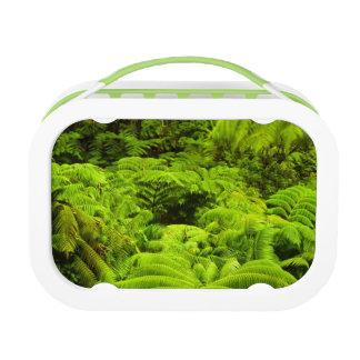 ハワイの大きい島、緑豊かな熱帯緑の草木 ランチボックス