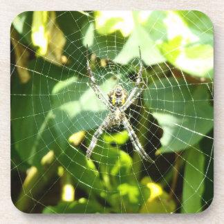ハワイの熱帯蜘蛛の巣のコースター コースター