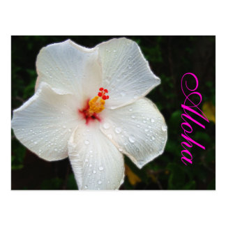 ハワイの白いハイビスカス ポストカード
