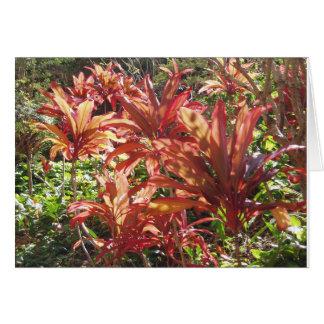 ハワイの赤いチタニウムの葉の植物の写真はメッセージカード感謝していしています カード