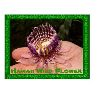 ハワイの野生花 ポストカード