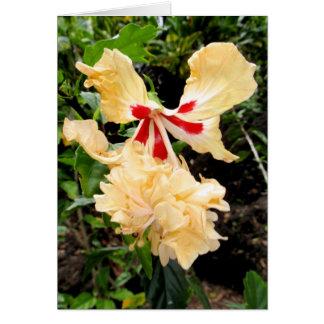 ハワイの雑種のハイビスカス カード