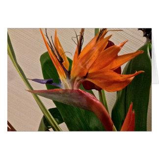 ハワイアンの花9 カード