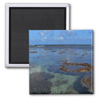 ハワイアンは磁石を浜に引き上げます マグネット