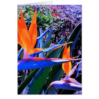ハワイ極楽鳥 カード