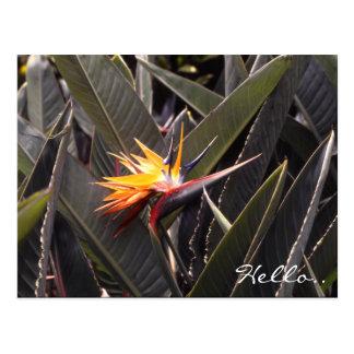 ハワイ極楽鳥 ポストカード