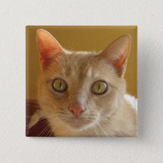 ハンサムなオレンジ猫 5.1CM 正方形バッジ