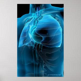 ハートおよび肺の四分の三の眺め ポスター