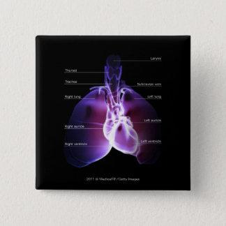 ハートおよび肺の構造 5.1CM 正方形バッジ