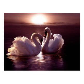 ハートを形作っている愛情のある白鳥 ポストカード