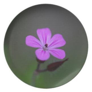 ハーブロバートの花、ゼラニウムrobertianum. プレート