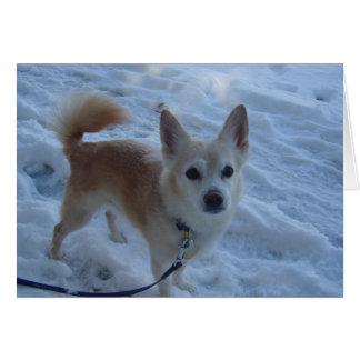 ハーレーの雪犬 カード